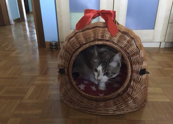 gatto-ammesso- residence-lago-como-06